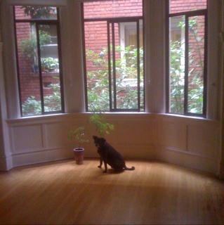 New apartment!