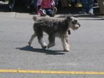 Charmeddog